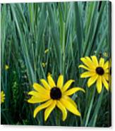 Black Eyed Susan And Tall Grass Canvas Print