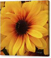 Black Eyed Susan Medley V3 Canvas Print