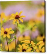 Black Eyed Susan Sunflowers In Field Canvas Print