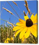 Black-eyed Susan With Grass Canvas Print