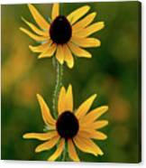 Black Eyed Susans 3276 H_2 Canvas Print