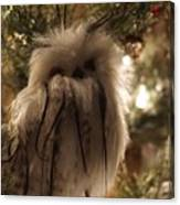 Black Feather Owl Canvas Print