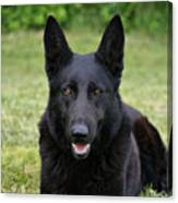 Black German Shepherd Dog II Canvas Print