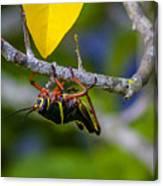 Black Grasshopper Canvas Print