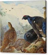 Black Grouse And Gamebirds By Thorburn Canvas Print