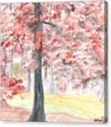 Black Gum Grove Canvas Print