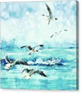 Black-headed Seagulls At Seven Seas Beach  Canvas Print