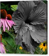 Black Hibiscus Canvas Print