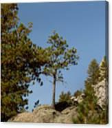 Black Hills Lone Tree Canvas Print