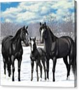 Black Horses In Winter Pasture Canvas Print
