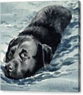 Black Lab Swimming Canvas Print