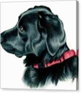 Black Lab With Red Collar Canvas Print