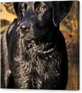 Black Labrador Retriever Dog Canvas Print