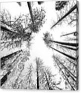 Black N White Sky-trees Canvas Print