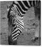 Black N White Stripes Canvas Print