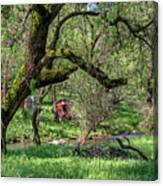 Black Oak And Creek Canvas Print