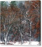 Black Oaks In Snowstorm Yosemite National Park Canvas Print