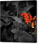 Black-orange Butterfly Canvas Print