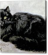 Black Persian Cat Canvas Print