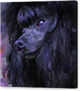 Black Poodle Canvas Print