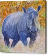 Black Rhino Is The Evening Sun Canvas Print