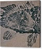 Black Sea Bass - Grouper - Rockfish Canvas Print