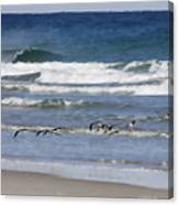 Black Skimmers In Ponce Canvas Print