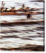 Black Skimmers Of Long Beach - Mississippi - Birds Canvas Print