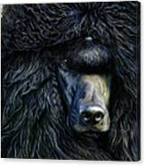 Black Standard Poodle Canvas Print