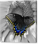 Black Swallowtail And Sunflower Color Splash Canvas Print