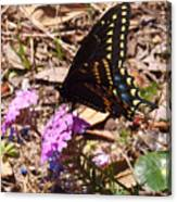 Black Swallowtail Butterfly Canvas Print