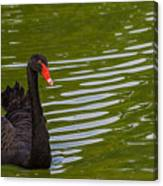 Black Swan II Canvas Print