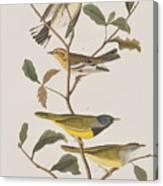 Black Throated Green Warbler Blackburnian Mourning Warbler Canvas Print