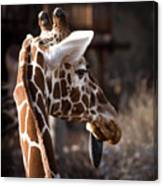 Black Tongue Of The Giraffe Canvas Print