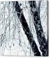 Black Tree White Night Canvas Print