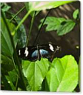 Black Tropical Butterfly Canvas Print