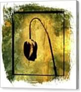 Black Tulip Canvas Print