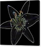 Black Velvet Lily Canvas Print