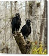 Black Vultures Canvas Print