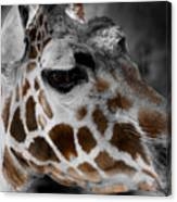 Black  White And Color Giraffe Canvas Print