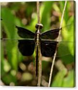 Widow Skimmer Dragonfly Female Canvas Print