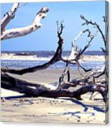 Blackbeard Island Beach Canvas Print