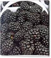 Blackberries Canvas Print