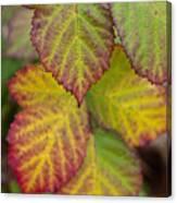 Blackberry Autumn Canvas Print
