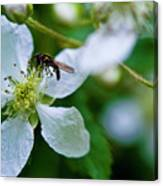 Blackberry Bzzzzz Canvas Print