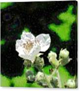 Blackberry Of My Eye Canvas Print