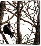 Blackbird In A Tree Canvas Print