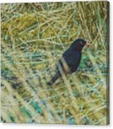 Blackbird In The Undergrowth Canvas Print