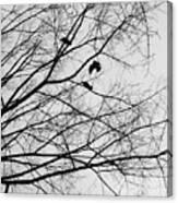 Blackened Birds Canvas Print
