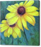 Blackeyed Susan Canvas Print
